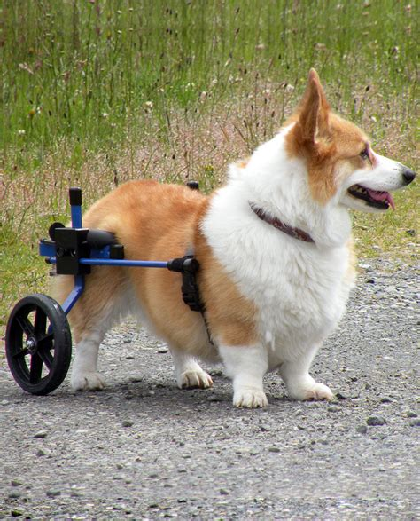 wheelchairs for dogs wheelchair chairs seating