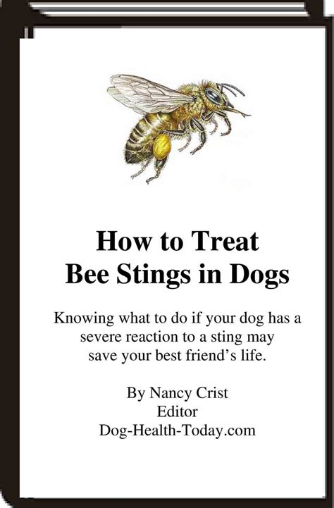 bee sting for dogs bee stings in dogs symptoms and treatment