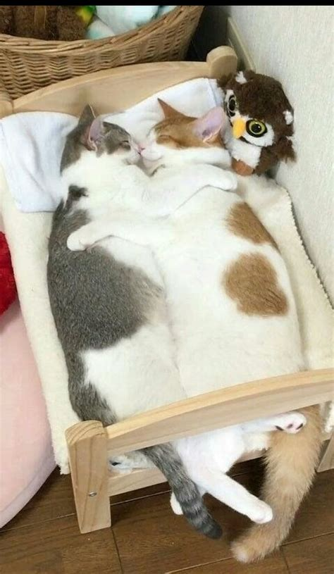 wie lange schlafen katzen die besten 25 wie lange schlafen katzen ideen auf
