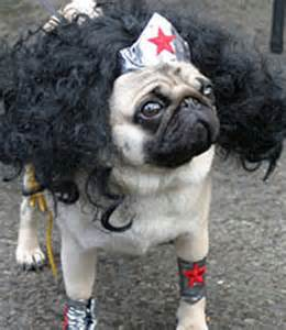 pug costume ideas pugs dressed as characters for photos scopecube