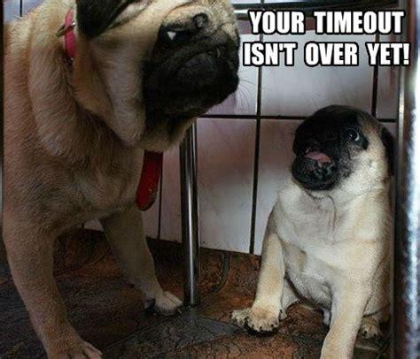 Funny Pug Meme - funny pug dog meme pun lol funny pug dog memes lol