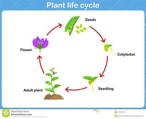 cycle of a cat diagram diagram cat cycle diagram