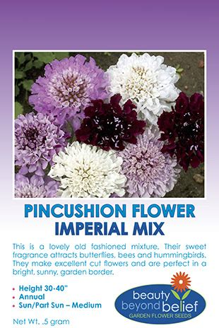 Bibit Benih Seeds Pinchushion Flower Mix Scabiosa Atropurpurea pincushion flower scabiosa atropurpurea imperial mix bbb seed wildflower seeds
