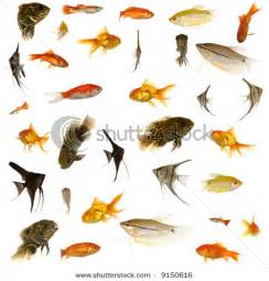 stock photo fish collection with many different tropical fish 9150616