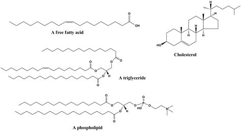 lipids diagram lipids