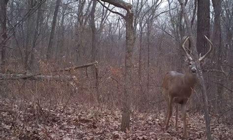 how to find deer bedding areas grow em big how to create deer bedding areas deer
