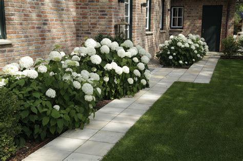 hortensie endless summer standort 2338 hortensien im garten gartenplanung und gartengestaltung