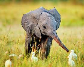 An adorable baby elephant to kick off your week
