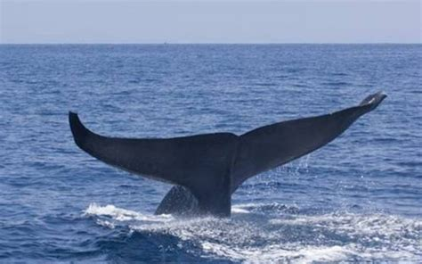 World S Whale Retailer Ends All Whale - how big is the whale wonderopolis