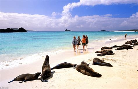 galapagos best islands galapagos voted best island in the world by travellers