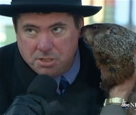 groundhog day jimmy pet scoop groundhog bites mayor s ear recovers after
