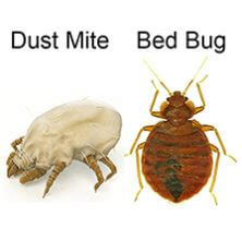 Bed Bug Dust by Get Rid Of Bed Bugs Permanently With Organic Diy Treatment