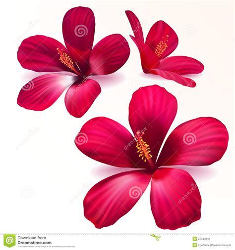 fiori realistici vector realistic purple flowers royalty free stock photos