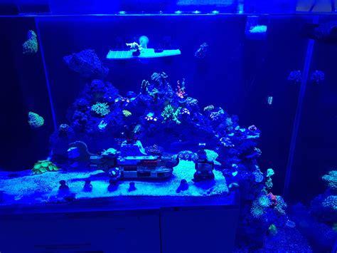 Reef Aquarium From Malaysia Under Orphek Led Aquarium Led Aquarium Lights