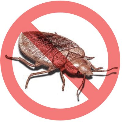 bed bugs solution bed bugs solution natural remedy vs professional solutions