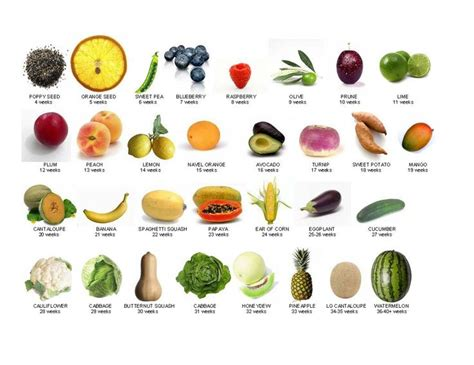 vegetables 10 name 10 images about vegetables and fruit list names on