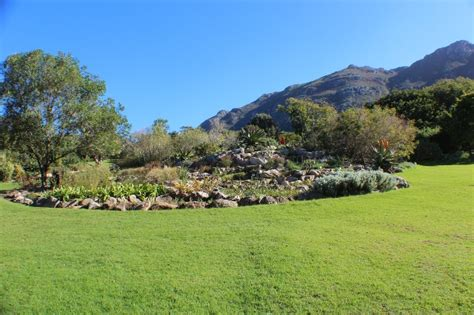 Kirstenbosch Botanical Gardens Picnics Most Beautiful Picnic Spots For South Cers Cing Tourist