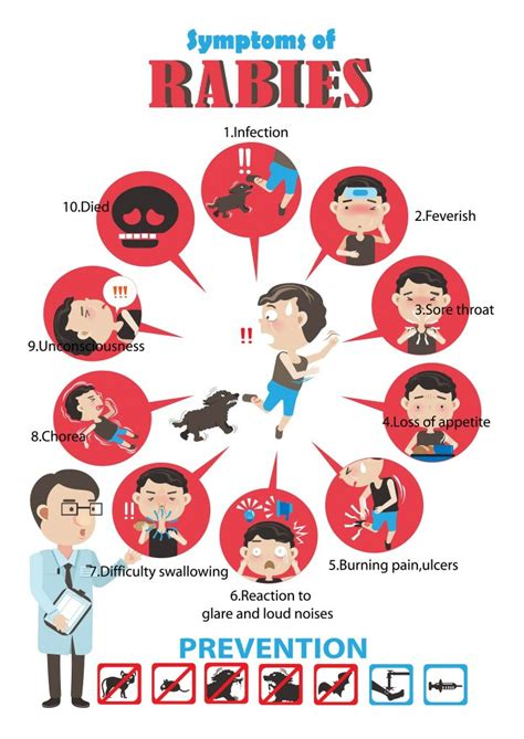how much are rabies for dogs what you should about rabies and prevention