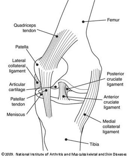 kneecap diagram resources newsletters knee health
