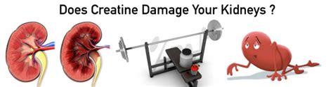 creatine kidneys creatine supplement information 101 hayward s total