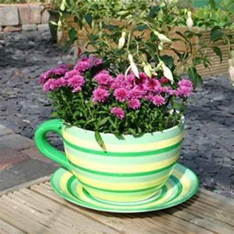 Cup And Saucer Planter by Customer Reviews For Botanico Striped Cup And Saucer Planter
