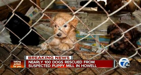 puppy mill rescue 100 dogs rescued from squalid puppy mill