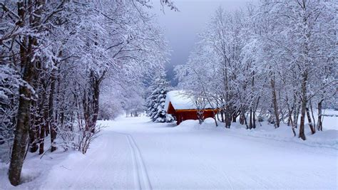 winter time path nature cabin woods forest snow