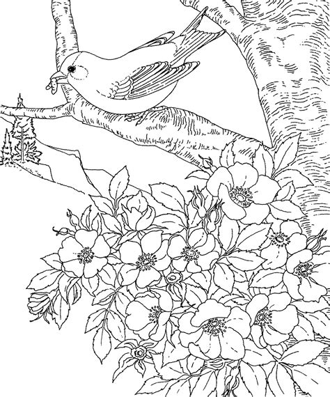 birds and flowers coloring pages pictures imagixs