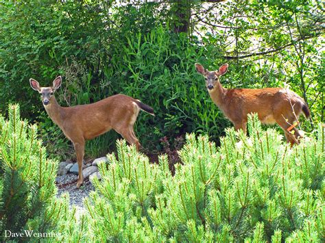 backyard wildlife becoming a backyard wildlife sanctuary