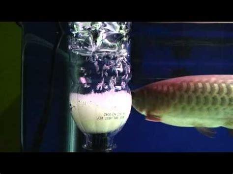 Aquarium Aquascape Skimmer Eheim Skim 350 Murah surface skimmer doovi