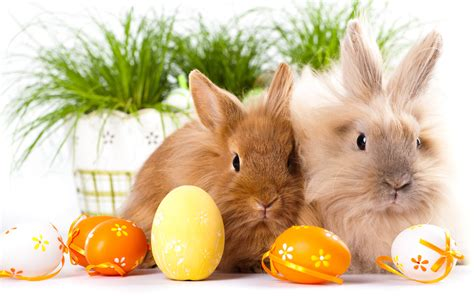 wallpaper free easter easter bunnies free hd wallpaper background