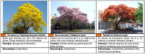 imagenes arboles navideños 193 rboles florales plan maestro v 237 a verde del mariachi