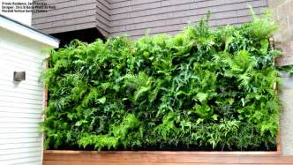 plants on walls vertical garden amp living wall gallery