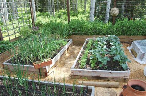 Garden Irrigation Ideas Raised Garden Irrigation Ideas Photograph Raised B
