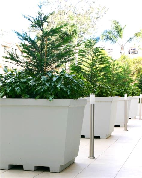 Precast Concrete Planter by Lightweight Concrete Planters From Mascot Precast Grc