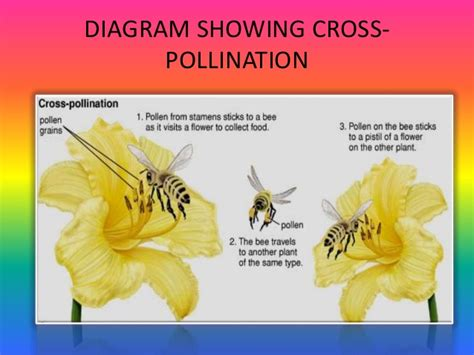 pollination diagram pollination and fertilization