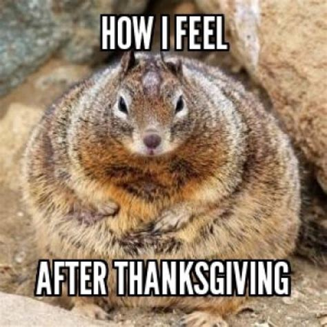Memes Thanksgiving - thanksgiving memes