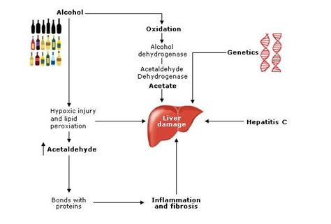 Thamine For Detox by Rcem Learning Alcoholic Liver Disease Reference Material
