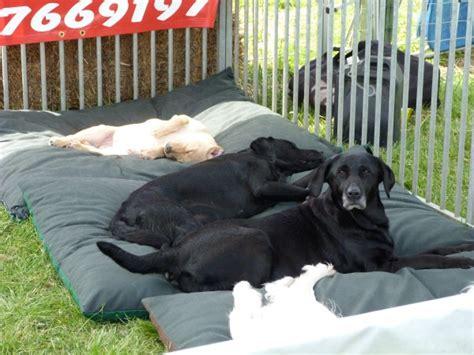 tear proof dog bed tear proof dog bed 28 images waterproof tear resistant
