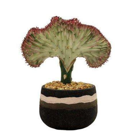 succulents cactus plants garden plants flowers the