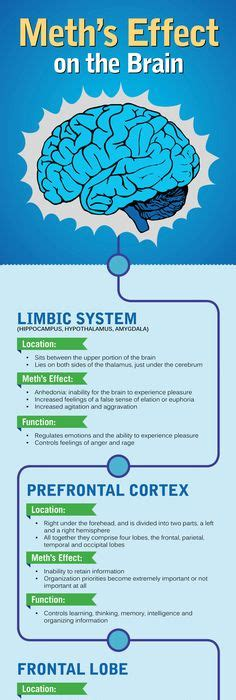 Effects Of Detox On The Brain by Term Effects Of Meth On The Brain Infographic