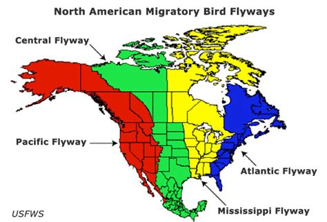 america bird migration map on the trail bird migration sibley nature center