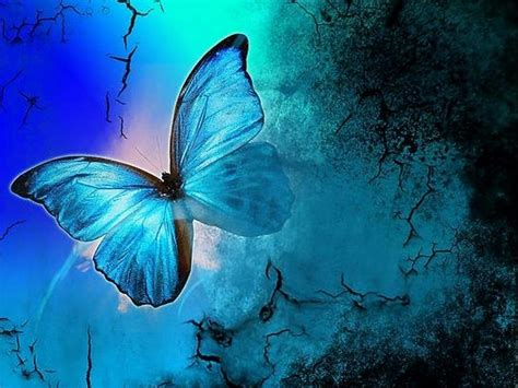 blue wallpaper with butterflies butterflies images shades of blue hd wallpaper and