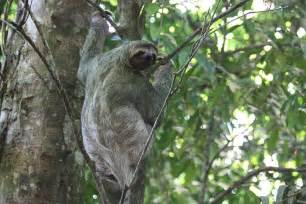 Plants And Animals Found In Tropical Rainforests - tropical rainforest animal life asu ask a biologist