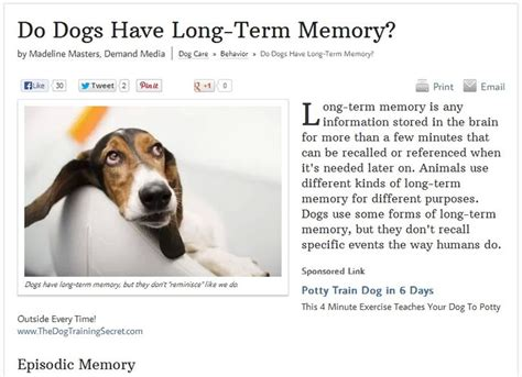 do dogs memories pin by jody murphy visual marketing trainer on for pin
