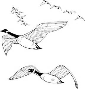 Flock Of Canada Geese Coloring Page  SuperColoringcom sketch template