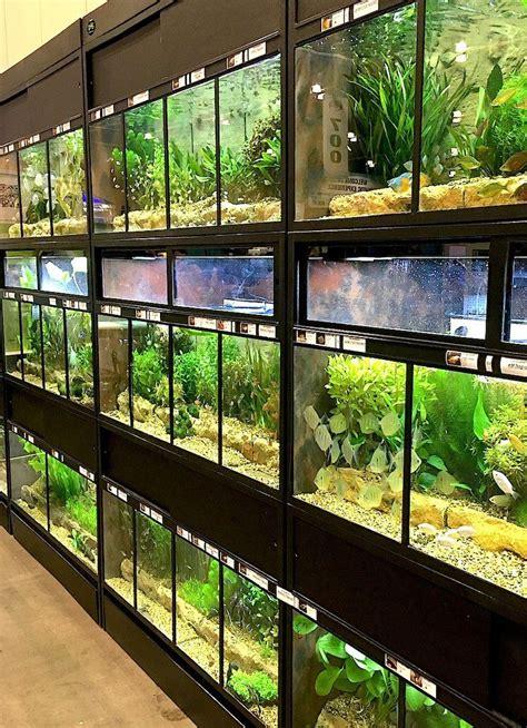 success   thrive fish enclosures aquarium store