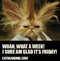 Thank God Its Friday Memes - happy friday cat memes image memes at relatably com