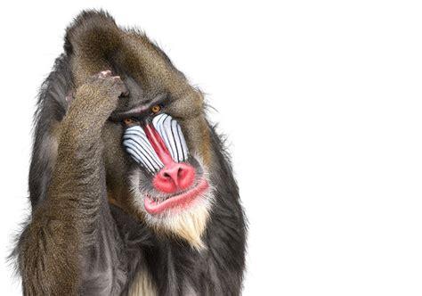 imagenes en blanco de animales fotos de animales con fondo blanco taringa