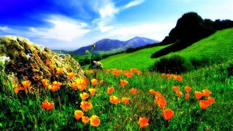 flower valley 1280 800 wallpaper spring flower valley hd wallpapers